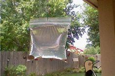 Does this really work? Keep Flies away from your BBQ or your back door. What you will need: A clear plastic sandwich bag. 2 cups of water. A bottle of lime juice. 2 teaspoons of salt. Two or three paper clips And some shiny pennies. Keep Flies Away, Get Rid Of Flies, Diy Garden, Home And Garden, Restaurant Owner, Ideias Diy, Outdoor Living, Outdoor Decor, Home Hacks