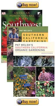 How to Grow a Winter Ve able Garden in Southern California Ve able Gardening Pinterest