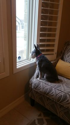 Had to move chair closer to window. She loves looking out.