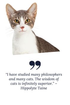 This quote captures the wisdom of cats exactly!