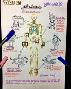 15 Ideas Medical School Study Ideas For 2019 Medicine Notes, Medicine Student, Human Body Anatomy, Human Anatomy And Physiology, Nursing School Notes, Medical School, Medical Anatomy, School Study Tips, Anatomy Study