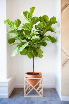 DIY Cube Plant Stand by remodelaholic #DIY #Plant_Stand #Cube