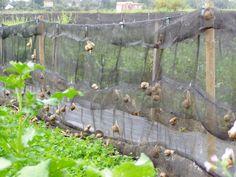 erste deutsche Schneckenfarm Snail Farming, Baby Snail, Pet Snails, Raising Bees, Livestock, Shipping Containers, Propagation, Homestead, Mushroom