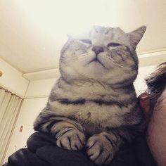 この顔w . 眠いのか、リラックスしてるのか、ドヤなのか… . #猫#ねこ#ネコ#いつもの定位置#今日はスンドゥブ#肩乗り猫#ペコねこ部paru8232016/03/15 23:15:35