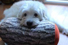 #Cute#Dog#CutePillow #CushionThrow #LogPillows #cylinder Pillow http://www.tachehf.com/collections/throw-pillows/products/tache-micro-bead-log-pillow