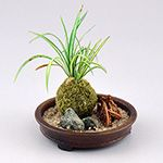 Spider plant/Moss ball Arrangement Class with Japanese Guild member Kyoko Kimura at the 35th Anniversary Guild Show.