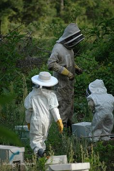a family of beekeepers
