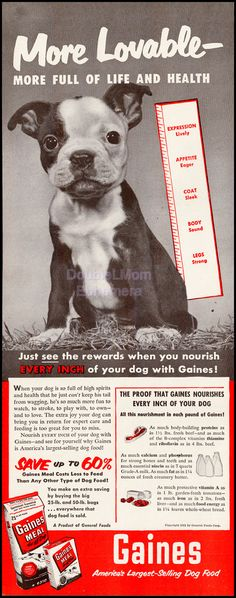 1951 Gaines Meal Dog Food Ad // French Bulldog Art // Frenchies // Vintage Dog Food Ads