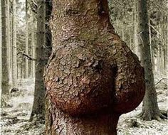 Nature bootay!!!