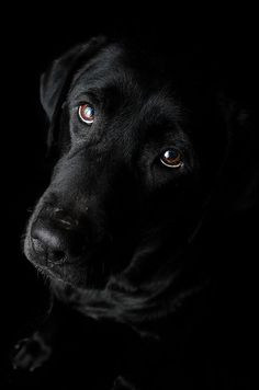 ~Next theme - just black dogs (any breed)