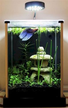 42 Astonishing Aquarium Design Ideas For Indoor Decorations - An aquarium is an enclosure with at least one clear side that houses water-dwelling fish, plants and other livestock and decorations. An aquarium offe. Betta Aquarium, Aquarium Aquascape, Aquarium Setup, Aquarium Design, Planted Aquarium, Aquarium Stand, Tropical Fish Aquarium, Tropical Fish Tanks, Betta Fish Tank