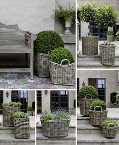 Dove grey wicker baskets with topiary plants and boxwood . Container Plants, Container Gardening, Urban Gardening, Garden Cottage, Farmhouse Garden, Garden Planters, Basket Planters, Boxwood Planters, Lavender Planters
