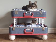 Been wanting to make a bunk bed for the pets, and here is a cute one!  Google Image Result for http://4.bp.blogspot.com/-1X2D9kXdXZ8/TjBqTQnB7VI/AAAAAAAABvw/6NX-LhPuQQs/s1600/pet-beds-made-from-reclaimed-materials-1_9HlS4_24429.jpg