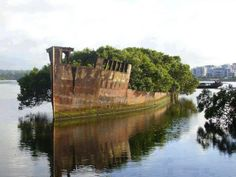 102 Years Old Abandoned Ship Is Now A Floating Forest - Homebush, Sydney, Australia