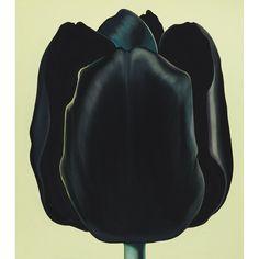 Lowell Blair Nesbitt, Black Tulip