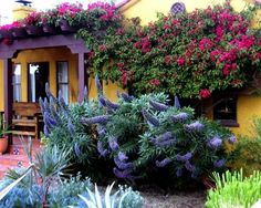 Drought Tolerant Garden Design, Pictures, Remodel, Decor and Ideas - page 26 Leads to a very nice site with many drought tolerant species .