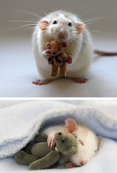 I don't like rats but this is an adorable picture!!