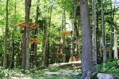 Construction on the NEW Aerial Forest Adventure Park is underway! Grand Opening - July 13! #loonevents