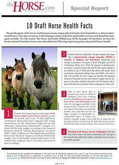 [FREE DOWNLOAD] Do you love draft horses? Learn about 10 of their unique health and management needs in this special report. TheHorse.com