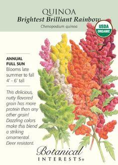 """Grow High Protein Quinoa (""""Keen-Wa"""") in Your Own Backyard"""