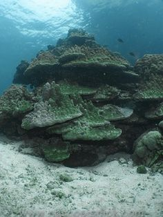 Κοράλλια, Υποβρύχια, Ύφαλος