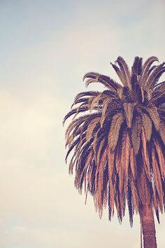ESCAPE - Photographic Print - Palm Tree, Los Angeles, California, Cali, Socal, Blue, Sky, Vintage, Wall, Decor, Hanging,