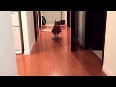 母の言葉がわかるフクロウ天海 - YouTube