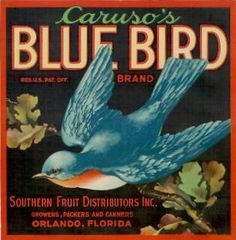 Blue Bird, Rare Florida Vintage Citrus Crate Label