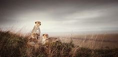Absolutely Breathtaking African Wildlife Photography by Klaus Tiedge - My Modern Metropolis