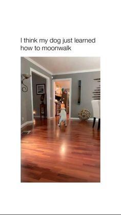 Moowalk