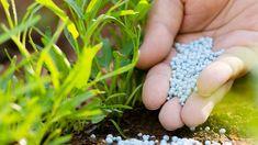 obrázek z archivu ireceptar.cz Organic Fertilizer, Organic Gardening, Gardening Tips, Aquaponics Diy, Aquaponics System, Agriculture, Growing Grapes, Plant Growth, Garden Pests
