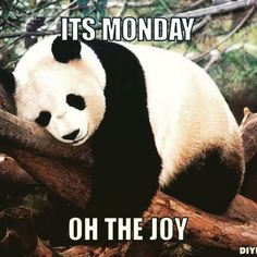 Yes it's Monday already! But don't worry we're here to get you through the week - try something new - keep an eye on this space for summer holiday activity ideas for the kids! #Monday #sad #summer #summerholidays #chocaffair