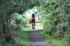 That moment when you first know the other is near, the horse's step quickens, your heart skips a beat,...pure joy!