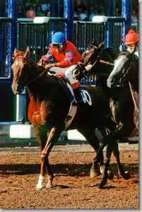 Alydar out of the gate in the Whitney Handicap 1978 (by Mark Wyville)