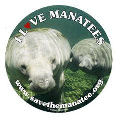 """Get your #FREE """"I love #manatees"""" #sticker today and show your support for the cows of the sea! #freebie"""