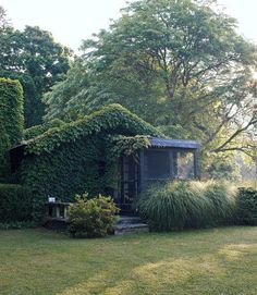 The back of this 1915 cottage is covered with English Ivy.  #gardens #yards