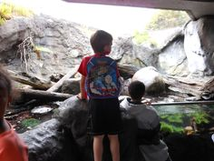 Dominic and Bryant checking things out at the Seattle Aquarium. July 2012