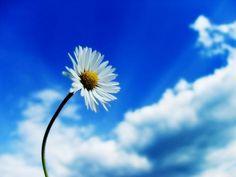Tudo vale a pena quando a alma não é pequena. (Fernando Pessoa) Amadurecer é olhar para trás e ver que tudo, todas as particularidades que passamos em experiências anteriores valeram a pena. Não pelas circunstâncias que as precederam, mas sim por notarmos que tudo serve para experiência e aprendizado. Acontecimentos ruins nos coroam não por sermos merecedores desse tipo de experiência, mas por certo, algo devemos aprender e extrair com o que acontece conosco. A vida realmente é uma caixinha…