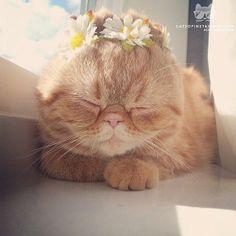 dis,!!!!!!  je ne suis pas une fille pour me décorer avec ces jolies fleurs , ..---