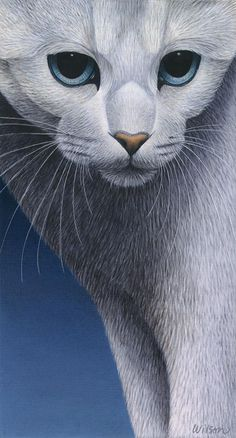 """""""Cropped Cat 5"""" - Carol Wilson. acrylic and prismacolor pencil {contemporary artist feline animal painting}"""