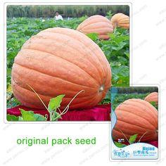 6 Seeds / Pack,Giant pumpkin seeds,pumpkin seeds super,garden organic vegetables