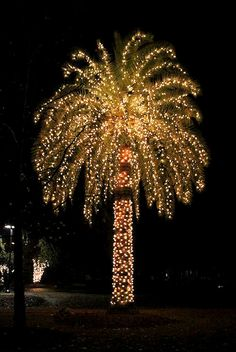 Florida Palm Tree With Christmas Lights