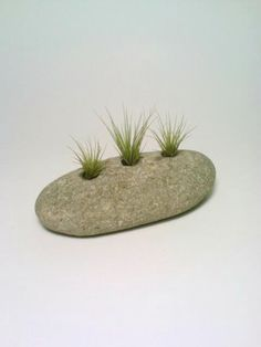 Air Plant Holder, Engraved Rock, Stone Paperweight, Natural Tillandsia Holder
