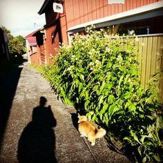 Kissanpiiskaajankuja