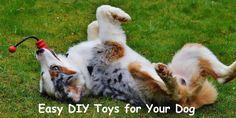 DIY Dog Crafts Man's Best Friend Will Love - Homemade Halloween Costumes - fabriccrafts Diy Dog Collar, Pet Collars, Diy Dog Shampoo, Kong Dog Toys, Best Dog Toys, Animal Projects, Diy Projects, Dog Crafts, Homemade Dog