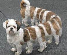 dog centiped