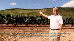Kovács Nimród Winery tour with Gábor Herendi Pinot Noir, Wines, Acre, Vineyard, Tours, World, Youtube, Outdoor, Outdoors