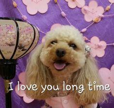 dear my doggie〜♥