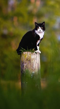 barn cat on a pole - rr5w5363w (Jeff on flickr)
