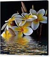 Plumeria Reflections Canvas Print